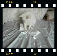 movie20060331.jpg
